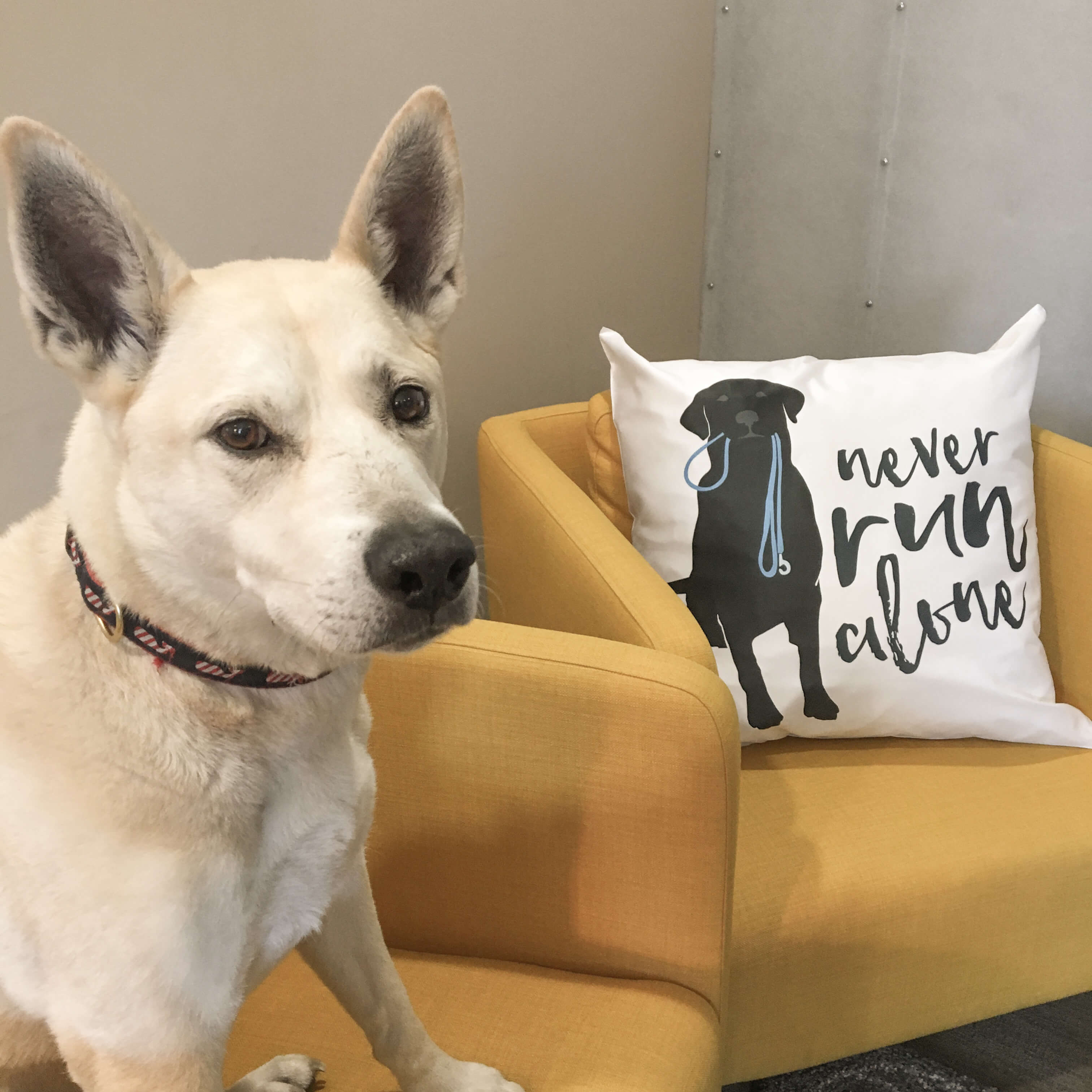 Dog with a pillow