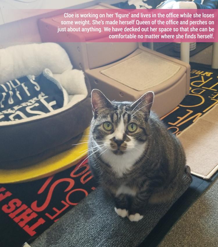 Rescue Cat - Cloe