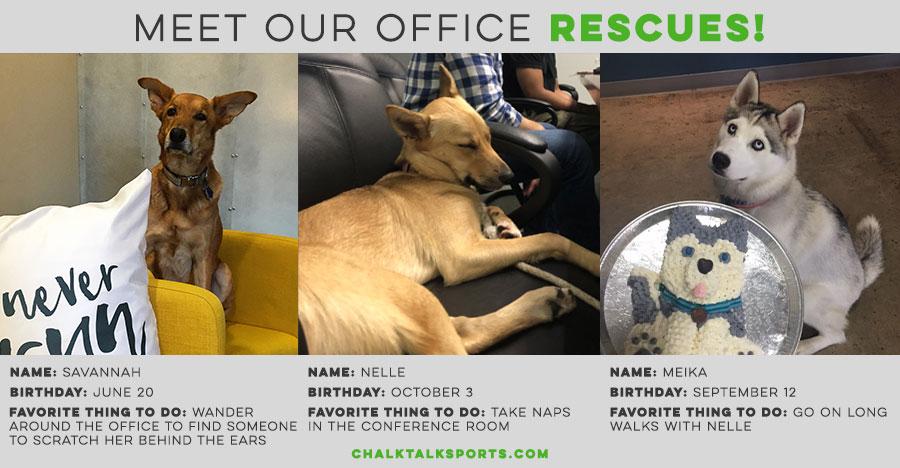 Meet our office rescues - Savannah, Nelle & Meika