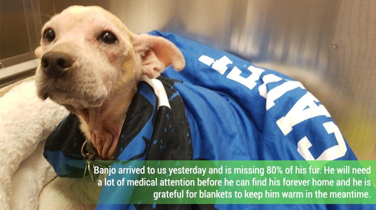 Rescue Dog - Banjo
